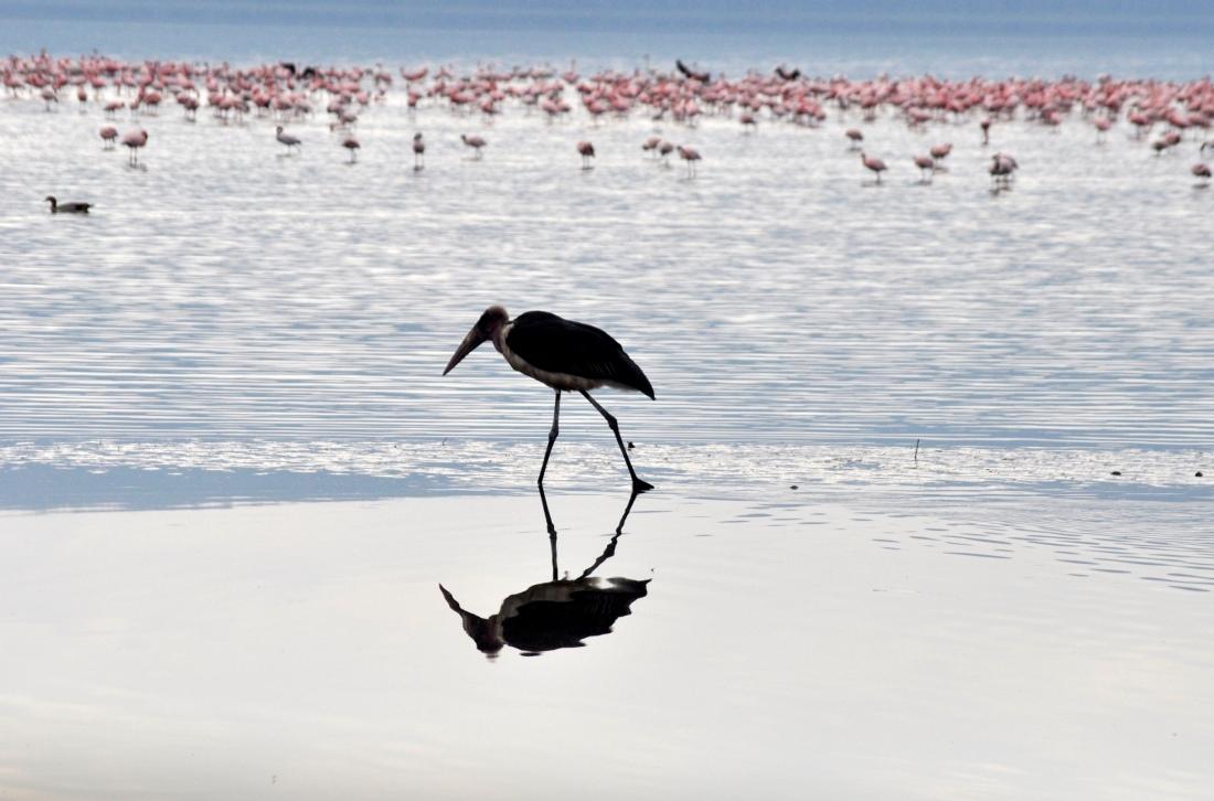 Reflective Stork